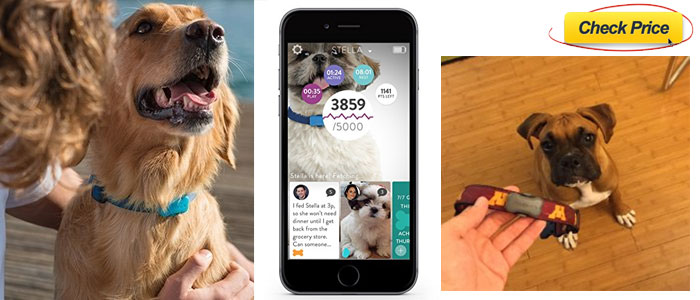 FitBark-dog-activity-tracker