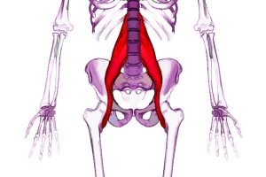 Lower Back Pain? Hip Flexors May Be The Cause